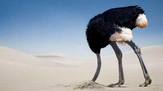 deve kuşu